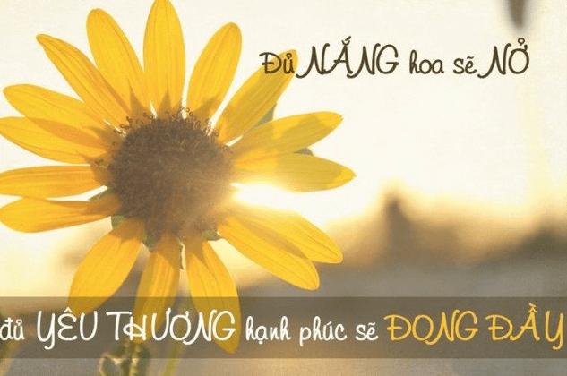 Đủ nắng hoa sẽ nở, đủ yêu thương hạnh phúc sẽ đong đầy